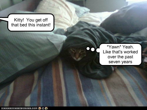 Lolcats: Kitty!  You get off that bed this instant!