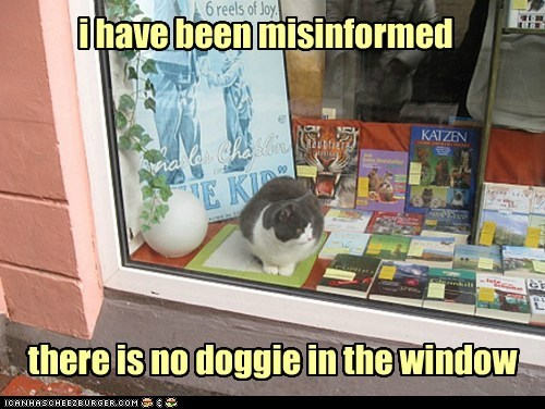 captions,Cats,doggie,doggie in the window,misinformed,window