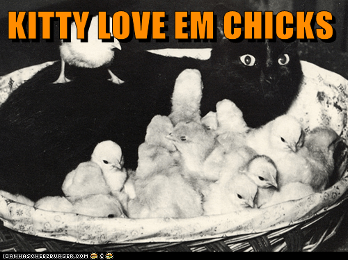 KITTY LOVE EM CHICKS