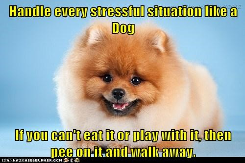 Handle every stressful situation like a Dog  If you can't eat it or play with it, then pee on it and walk away.