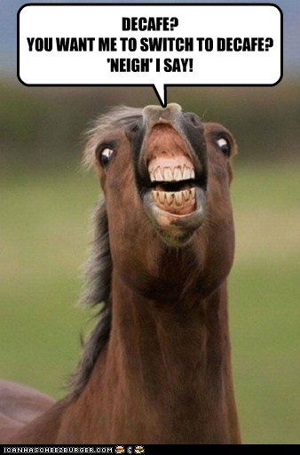 Animal Capshunz: You Hear Me? Neigh!