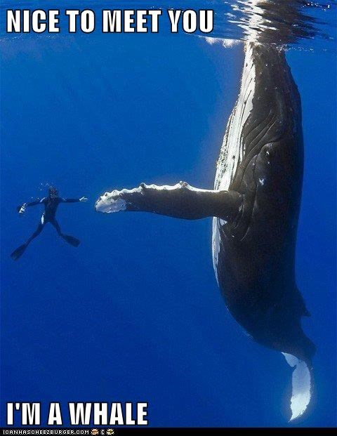 NICE TO MEET YOU  I'M A WHALE