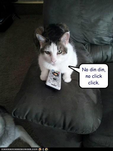 captions,Cats,dinner,no,remote control,TV