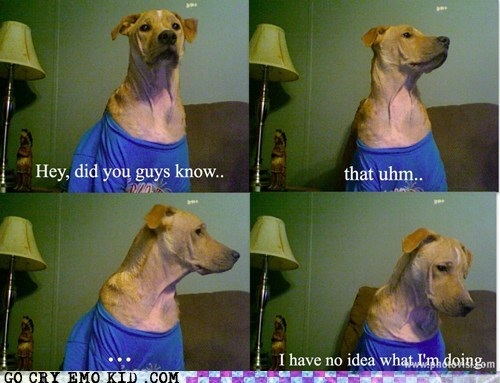 How Me a Dog Learned Tumblr