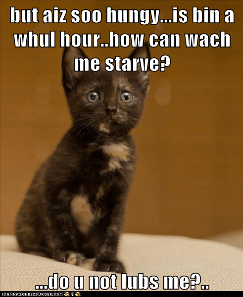 captions,Cats,dinner,food,hungry,love,starve