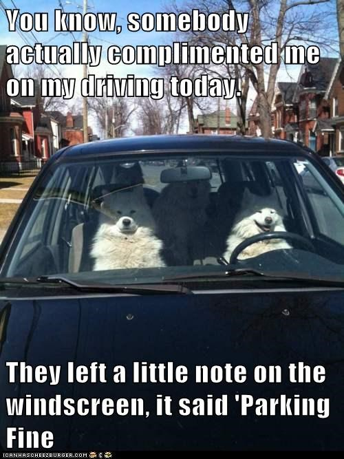 car,compliment,dogs,driving,parking ticket,samoyed