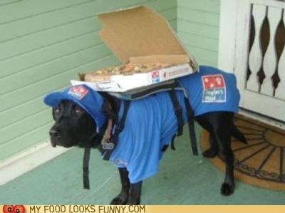 Ding Dong! Pizza Delivery Dog!