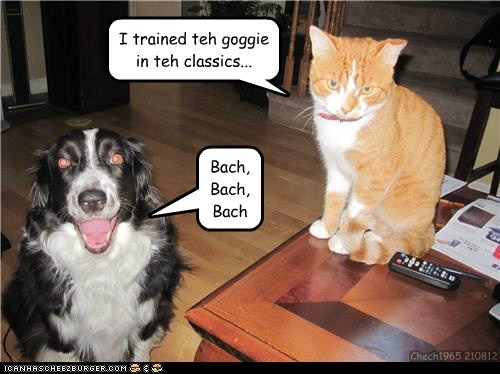 Bach,captions,Cats,classical music,classics,dogs,train