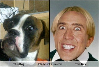 This Dog Totally Looks Like This Guy