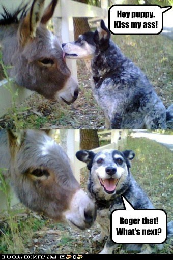 ass,dogs,donkey,kiss my ass,lick,literally,pun,puppy,Roger that,whats-next
