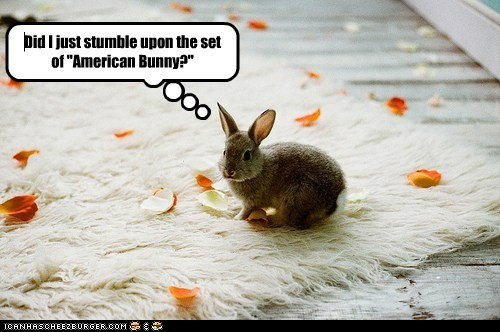 "Did I just stumble upon the set of ""American Bunny?"""