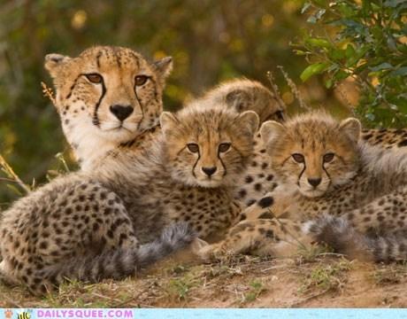 Live Cheetah Cub Cam!