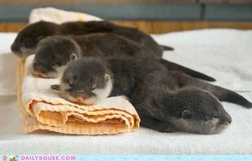 squee,otters,blanket,nap,sleeping,Babies