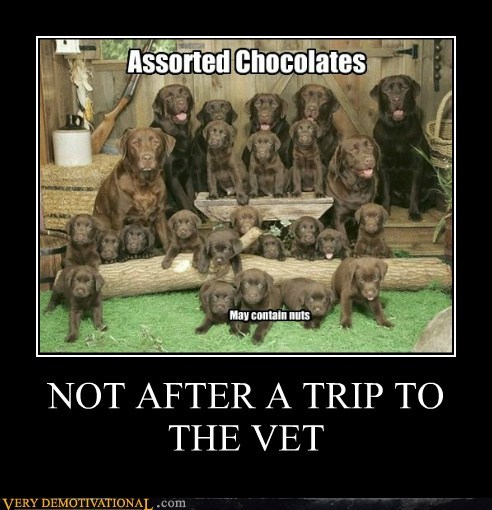 NOT AFTER A TRIP TO THE VET