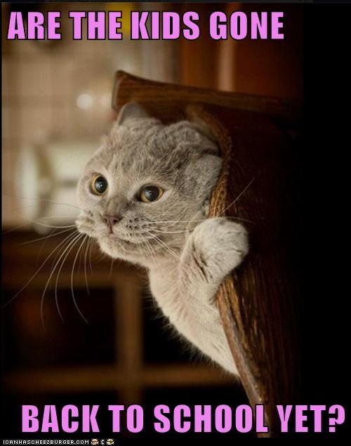 back to school,captions,Cats,hide,kids,school,summer,summer break