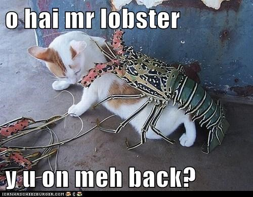 o hai mr lobster  y u on meh back?