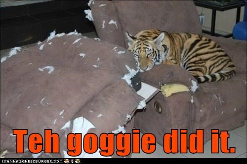 blaming,captions,chair,furniture,goggie,ripped,tiger,torn