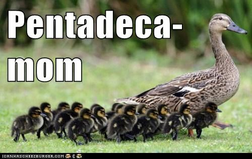 ducklings,ducks,kids,lots,mom,octomom,walking