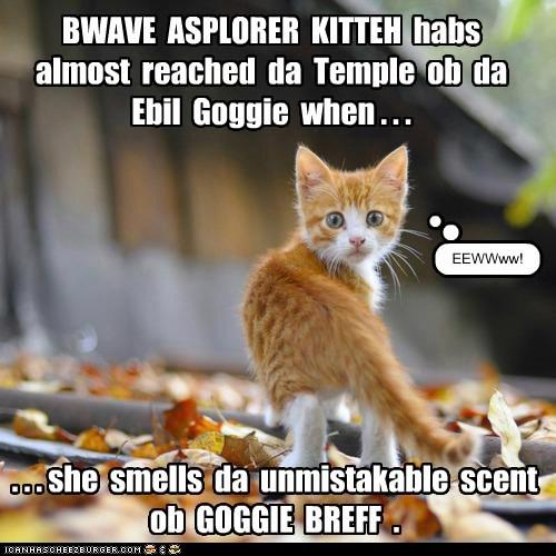brave explorer kitteh,captions,Cats,play,pretend,story