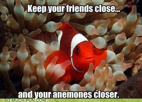 anemone,close,closer,clownfish,enemies,friends,idiom,opposites,similar sounding