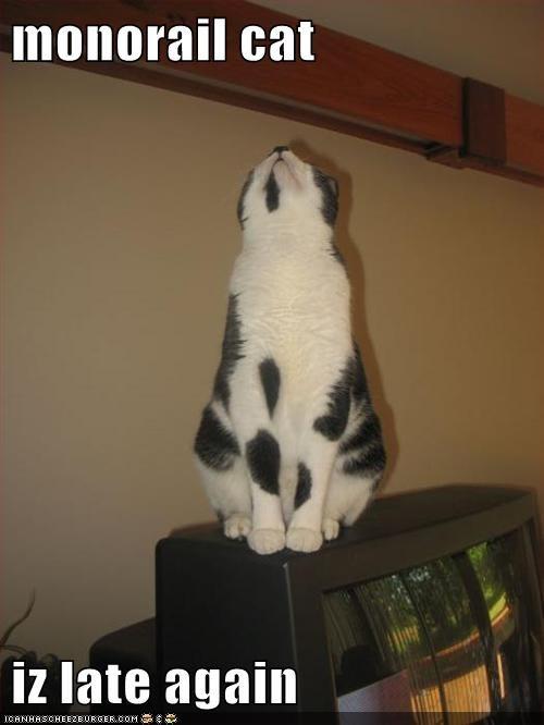 captions,Cats,late,monorail cat,patient,wait