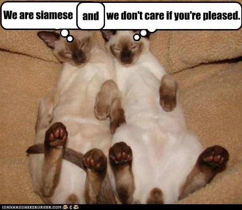 We are siamese and we don't care if you're pleased.