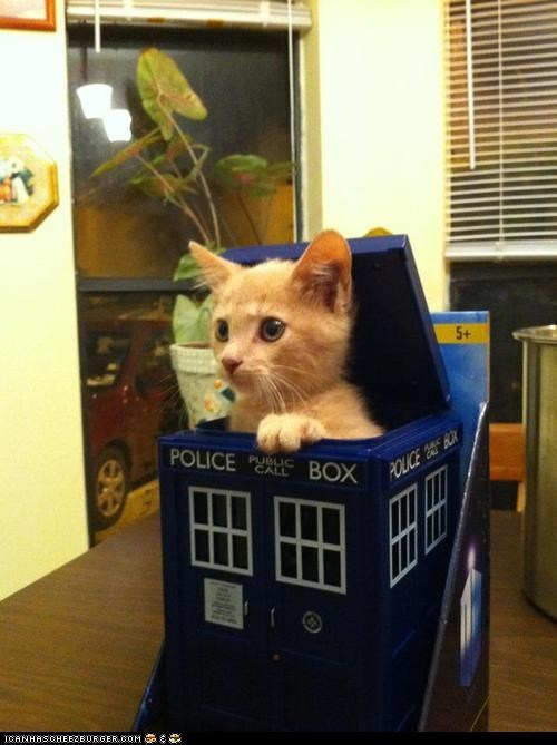 Cats,cyoot kitteh of teh day,doctor who,kitten,tardis