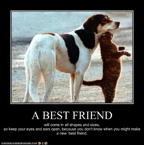 best friends,cat,dogs,kittehs r owr friends,motivational poster,what breed