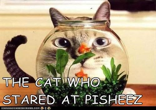 THE CAT WHO STARED AT PISHEEZ