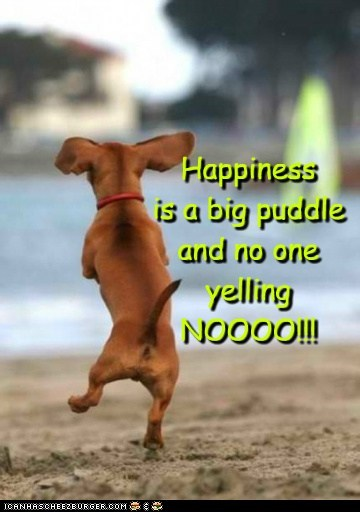 Happiness is a big puddle  and no one  yelling  NOOOO!!!