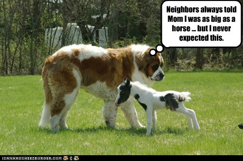 Neighbors always told Mom I was as big as a horse ... but I never expected this.