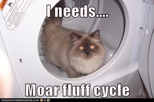 I needs....  Moar fluff cycle