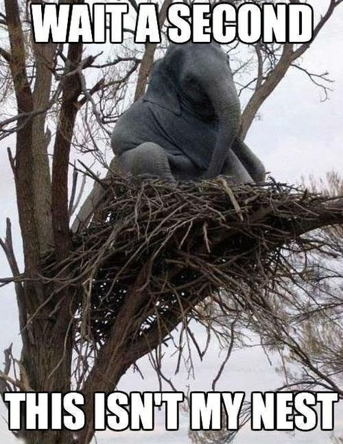 confused,elephant,nest,tree,wait a second