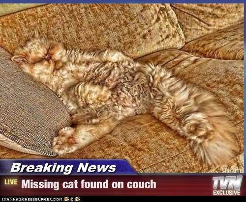 Breaking News - Missing cat found on couch