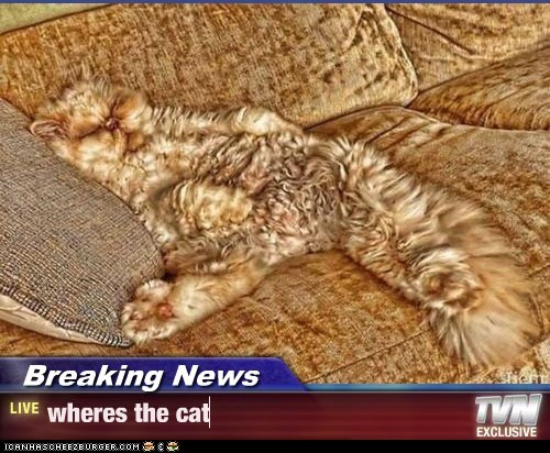 Breaking News - wheres the cat