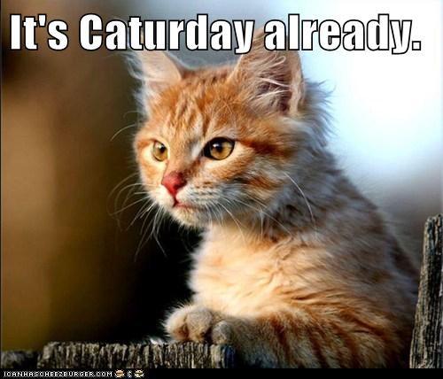 It's Caturday already.