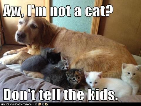 Aw, I'm not a cat?  Don't tell the kids.