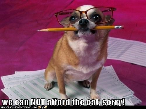 we can NOT afford the cat, sorry!