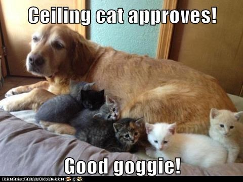 Ceiling cat approves!  Good goggie!
