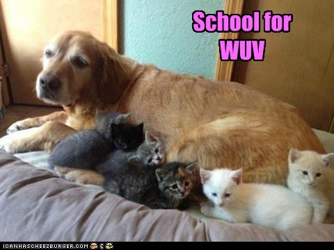 School for WUV