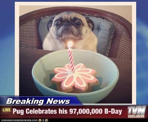 Breaking News - Pug Celebrates his 97,000,000 B-Day