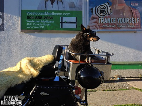 buddy,cars,companion,dogs,driving,motorcycle