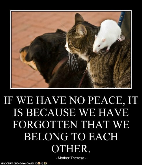 IF WE HAVE NO PEACE, IT IS BECAUSE WE HAVE FORGOTTEN THAT WE BELONG TO EACH OTHER.