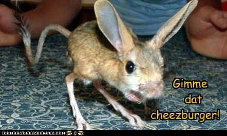 Gimme        dat  cheezburger!