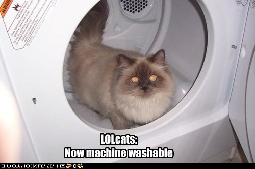 LOLcats:   Now machine washable