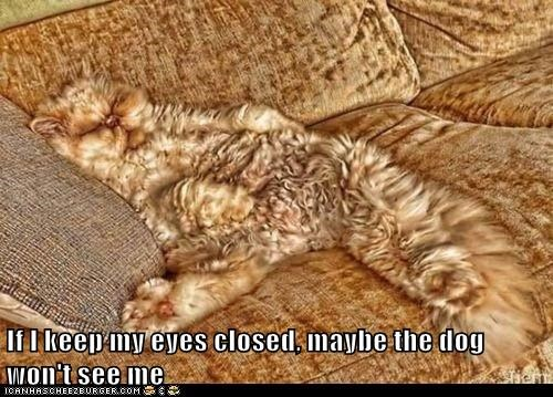 Lolcats: If I keep my eyes closed