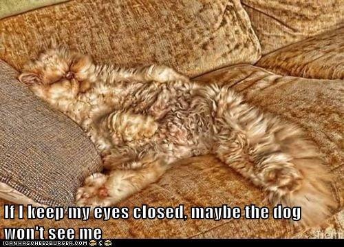 Lolcats: If I keep my eyes closed