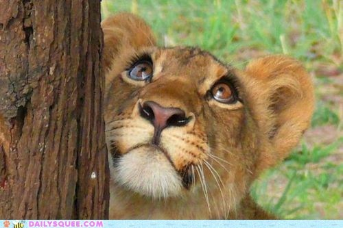 squee,lion,eyelashes,big cat,nose,mascara