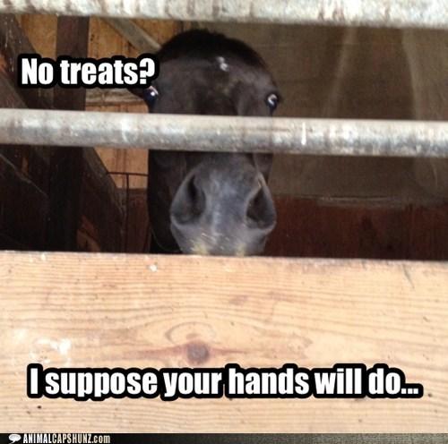 angry,bite,captions,creepy,hands,horse,horses,scary,threat,threats,treats