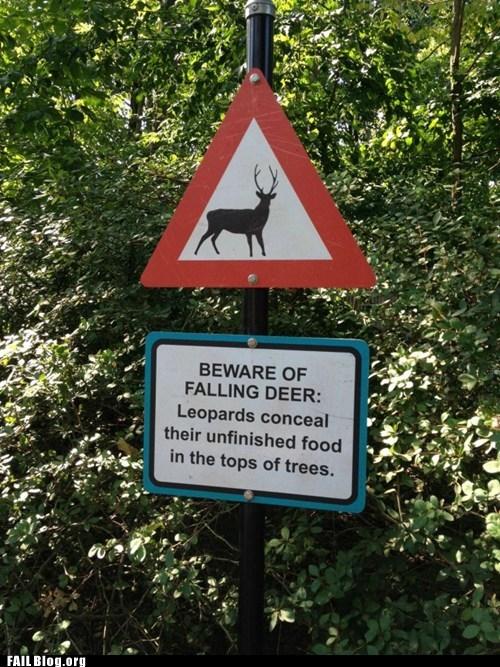 best of week,deer,falling,Hall of Fame,leopard,sign,warning